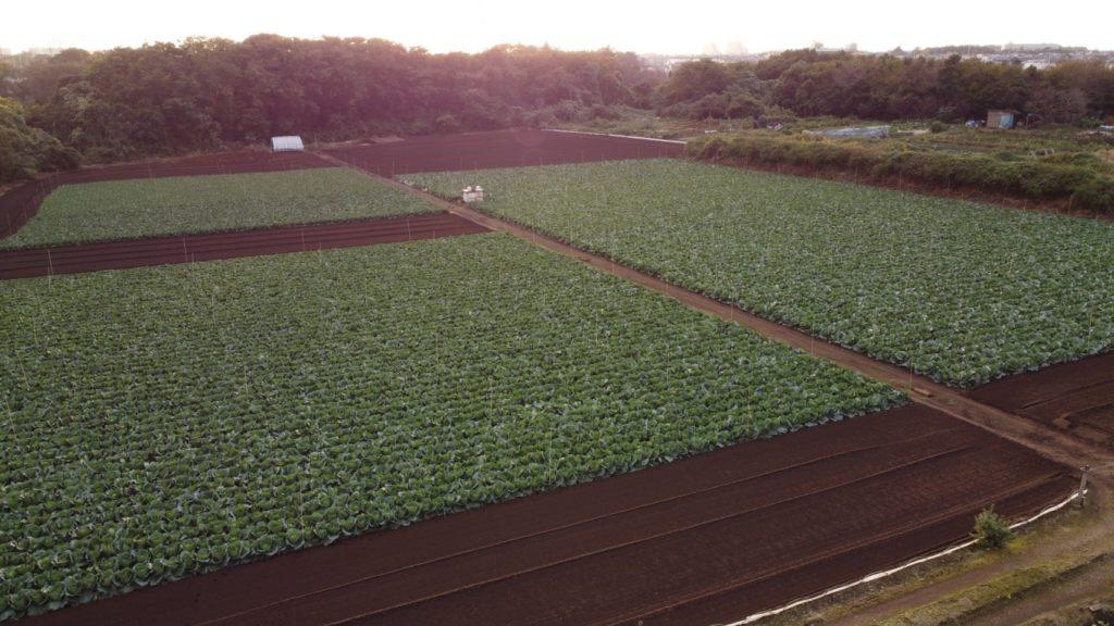 農業用ドローンで撮影した写真
