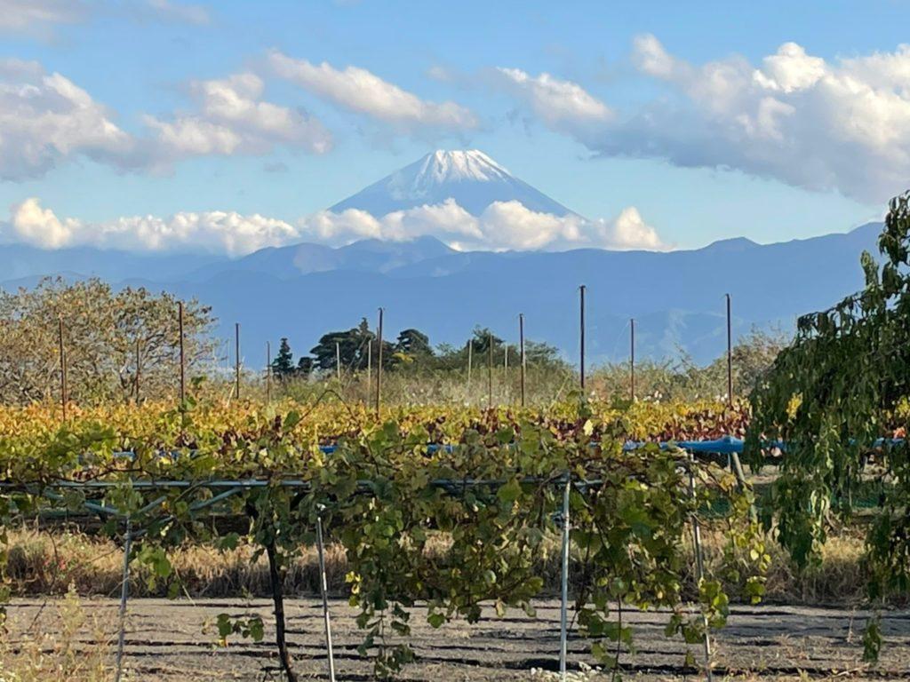 中込農園から見える富士山