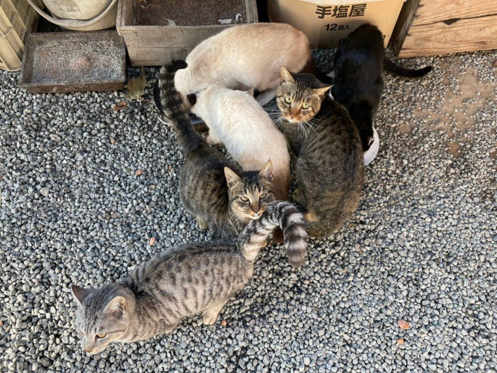 中込農園の猫