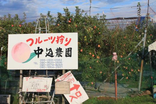 中込農園での短期住み込み農業ボランティア