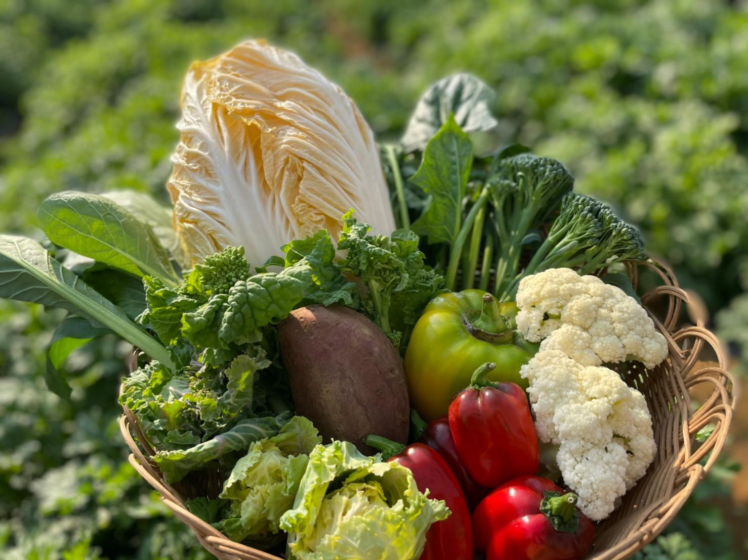 野菜・果物の写真の撮影方法