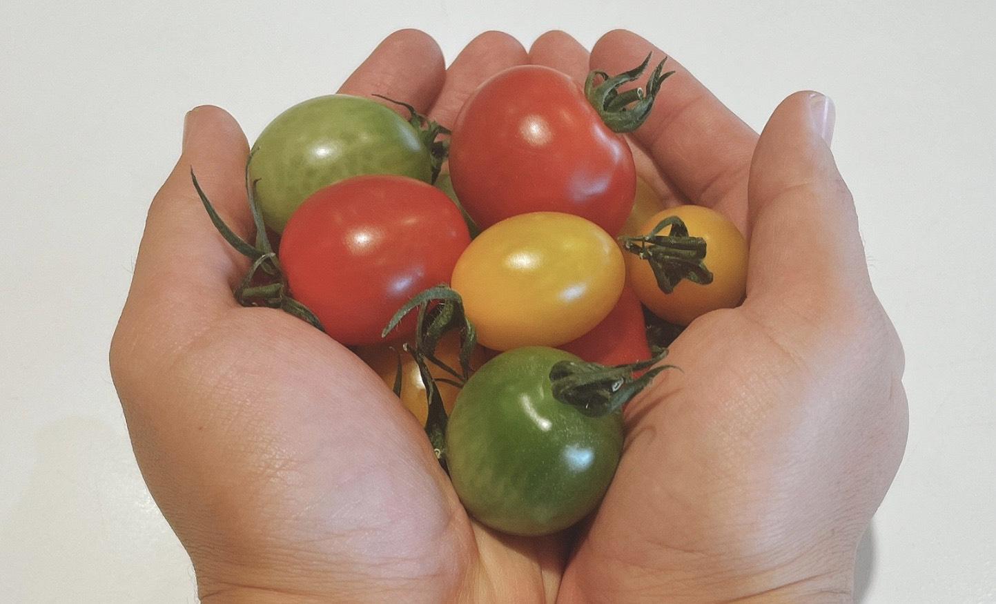野菜・果物を撮影する方法