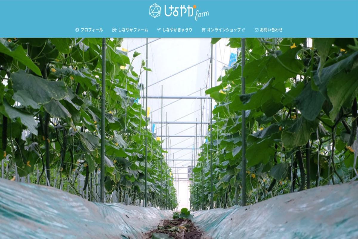 きゅうり農家さんのブログその1:しなやかファームさま