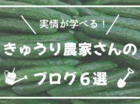 きゅうり農家さんのブログ6選【実情が学べる!】