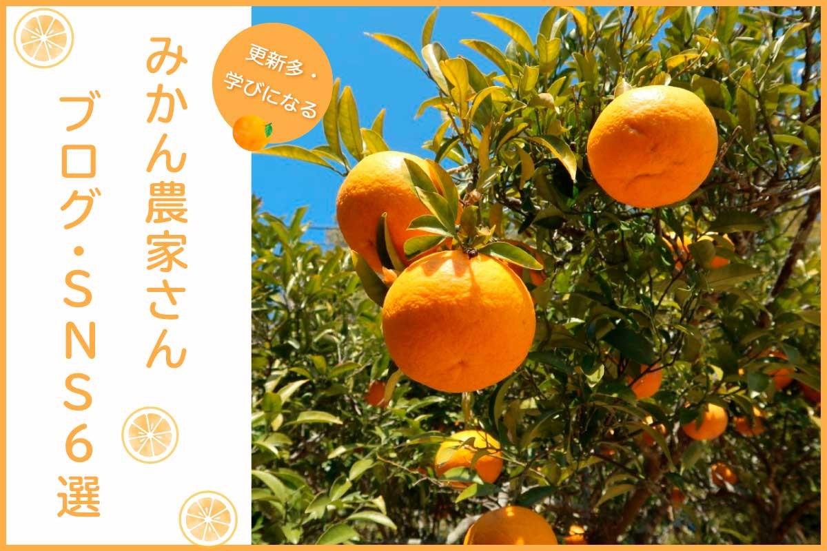 みかん農家さんのブログ・SNS6選【更新多・学びになる】