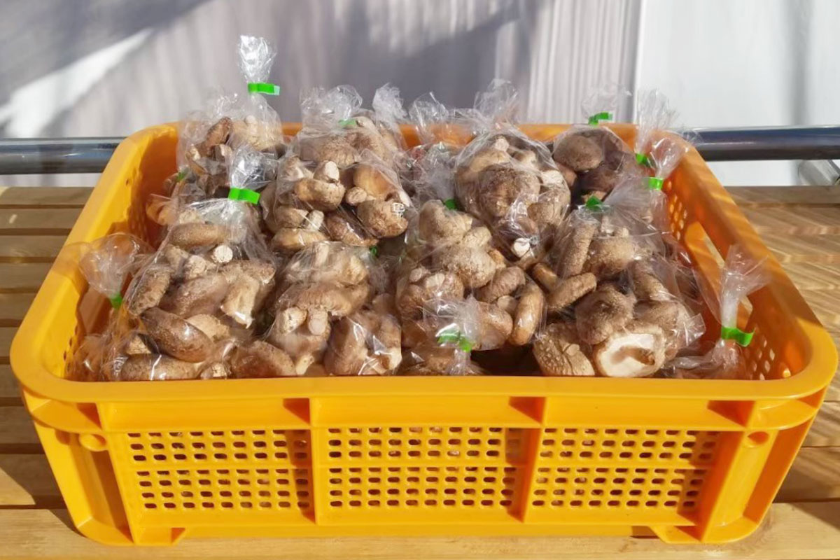 高く売れる野菜:椎茸